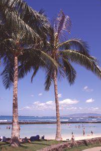 Waikiki-ocean-scene-#19-Jun.'02